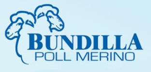 Bundilla, Young, production sale